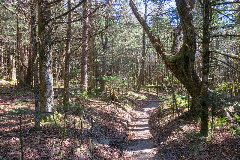 Appalachian Trail - 6,020'