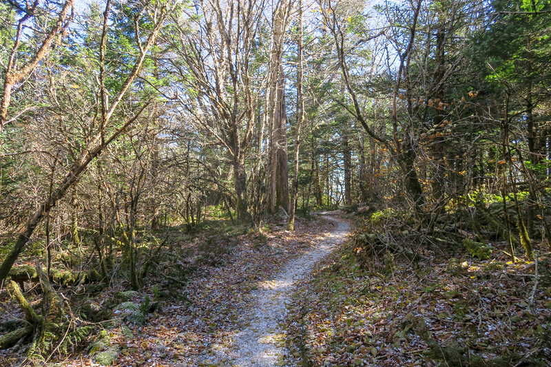 Appalachian Trail - 6,100'