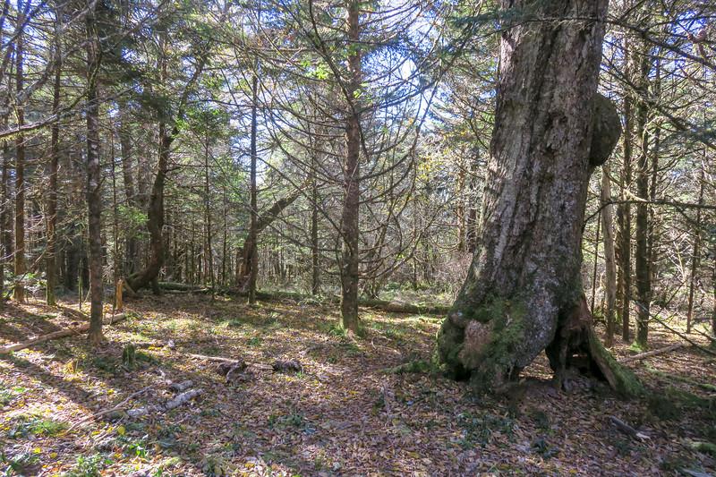 Appalachian Trail - 5,830'