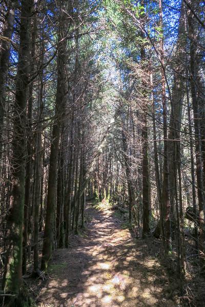 Jumpoff Spur Trail - 6,140'