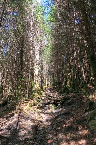 Jumpoff Spur Trail - 6,150'