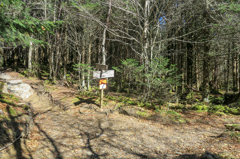 Appalachian-The Boulevard Trail Junction - 6,020'