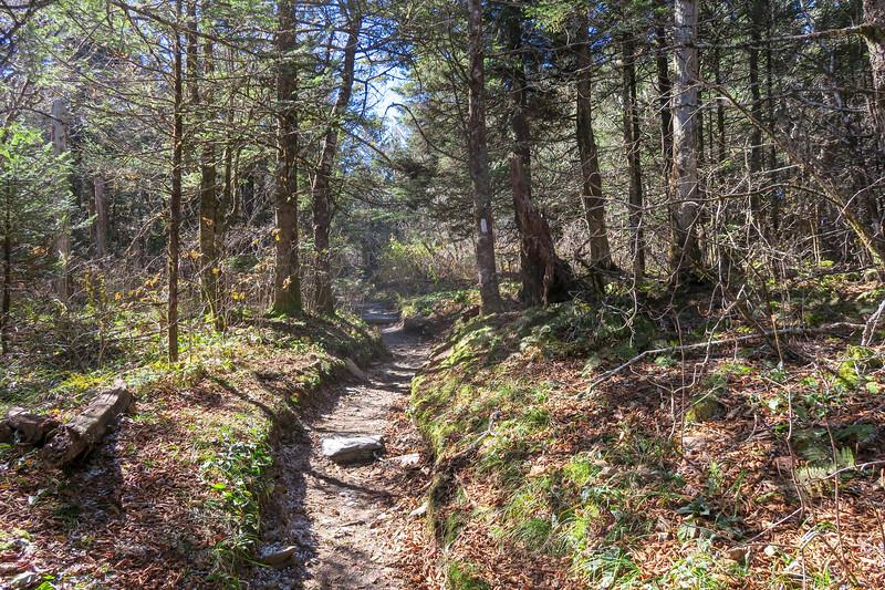 Appalachian Trail - 6,000'