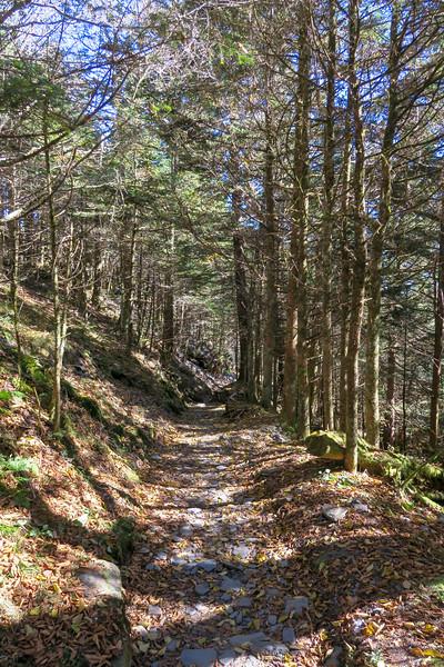 Appalachian Trail - 5,800'
