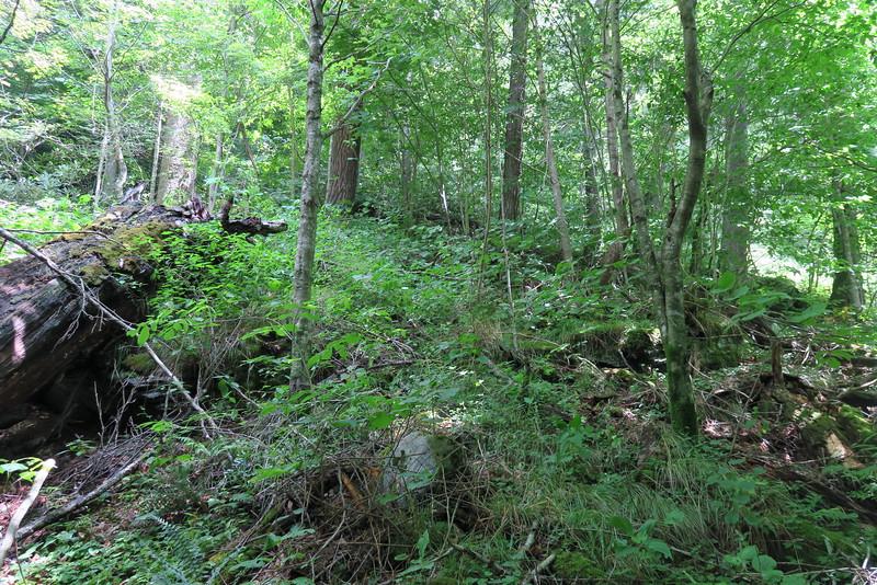 Enloe Creek Falls Bushwhack - 3,750'