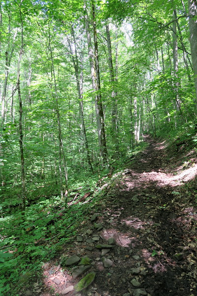 Hyatt Ridge Trail - 3,440'