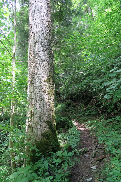 Enloe Creek Trail - 3,780'