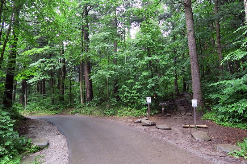 Trillium Gap Trailhead