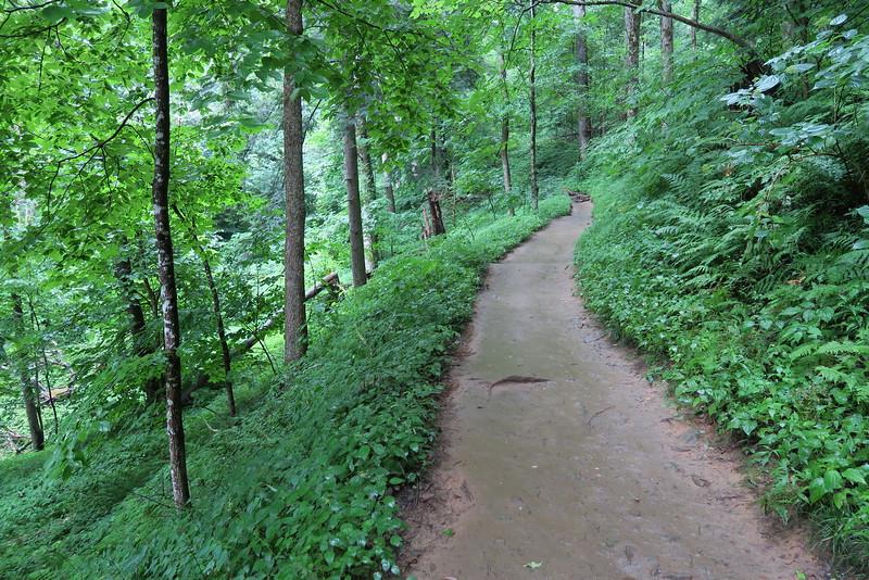Trillium Gap Trail