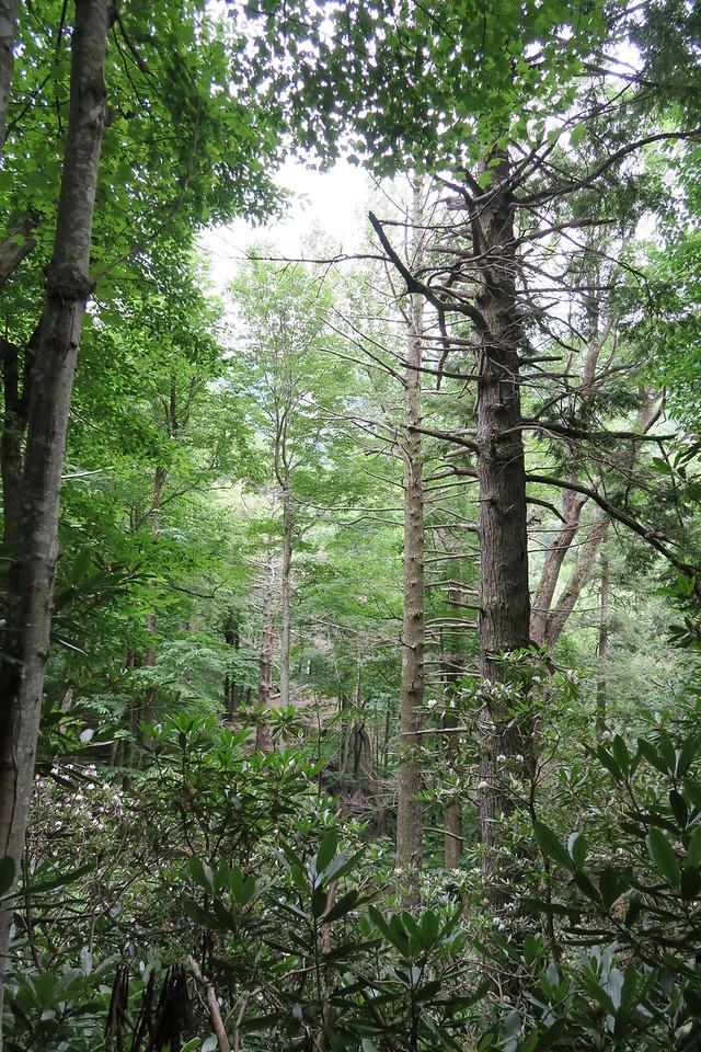 Low Gap Trail - 3,160'