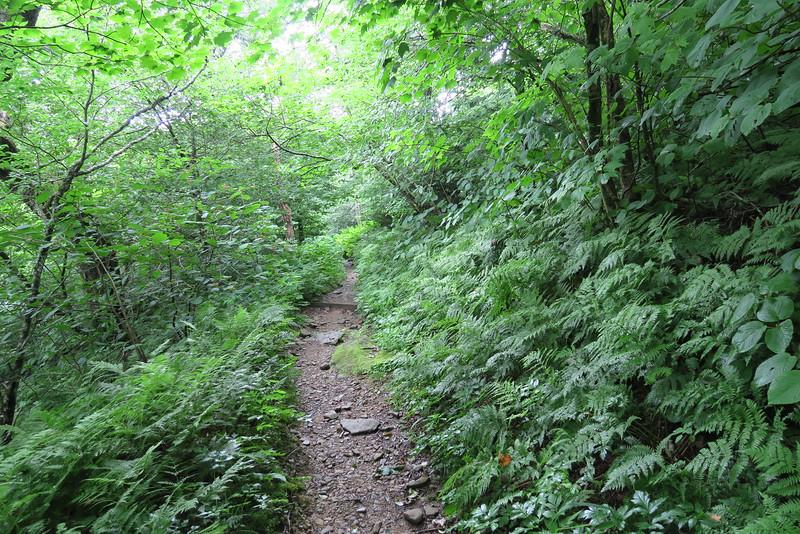 Mount Cammerer Trail - 4,960'