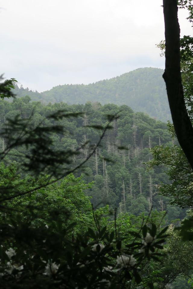 Low Gap Trail - 3,700'