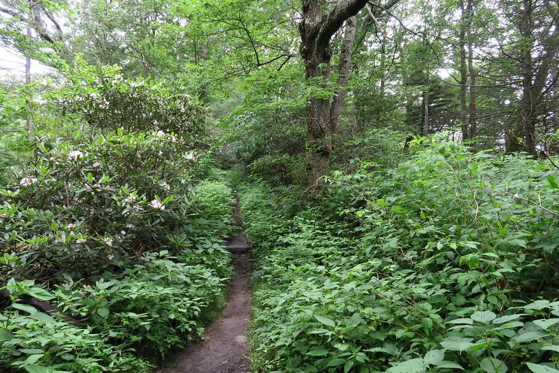 Appalachian Trail - 4,900'