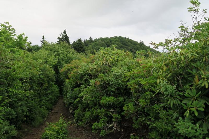 Mount Cammerer Trail - 5,000'