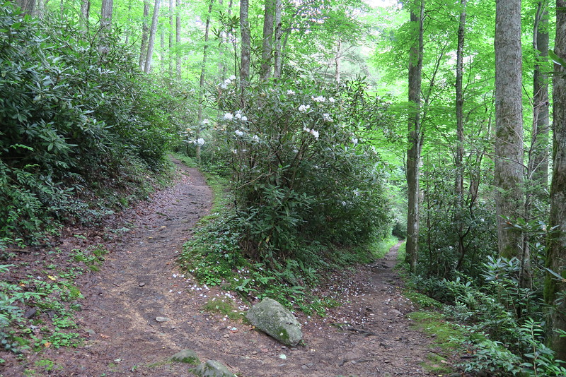 Low Gap Trail - 3,040'