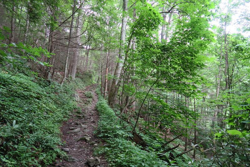 Low Gap Trail - 3,400'