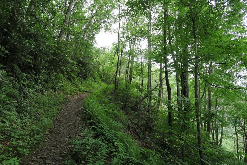 Low Gap Trail - 4,080'