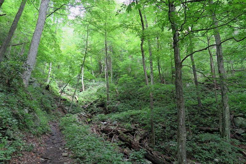 Low Gap Trail - 3,240'