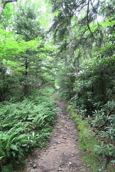 Mount Cammerer Trail - 4,950'