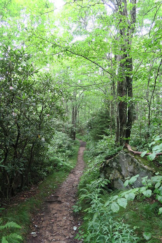 Mount Cammerer Trail - 4,920'