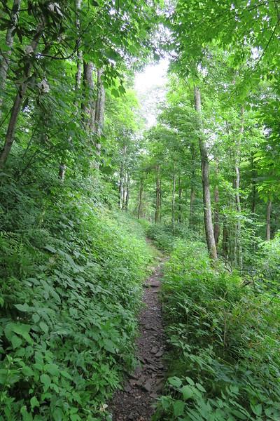 Low Gap Trail - 4,150'