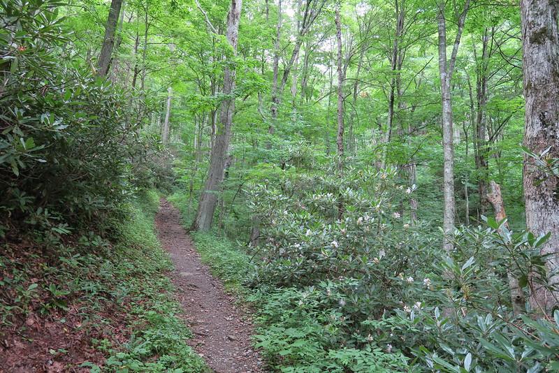 Low Gap Trail - 3,840'
