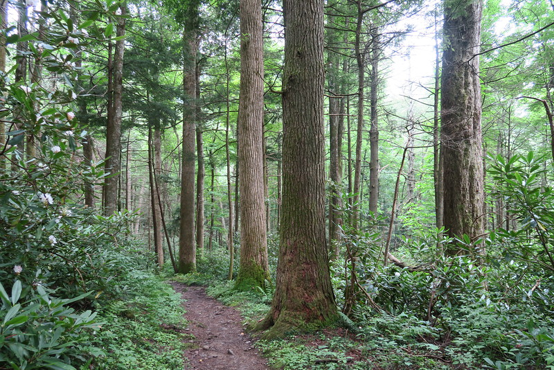 Low Gap Trail - 3,000'