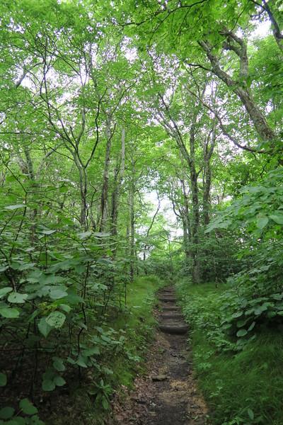 Appalachian Trail - 5,030'