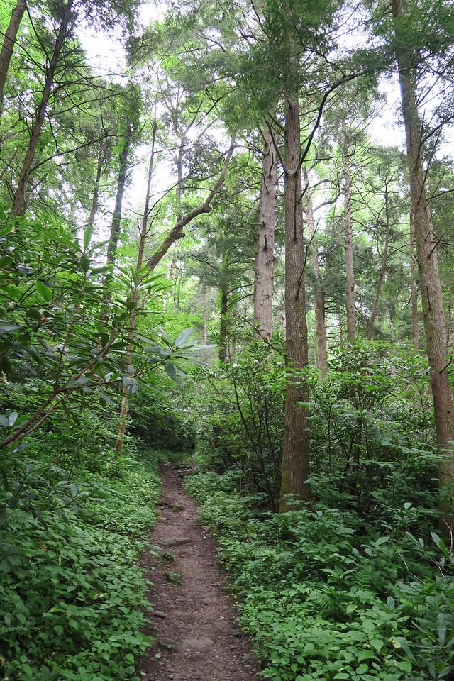 Low Gap Trail - 2,850'