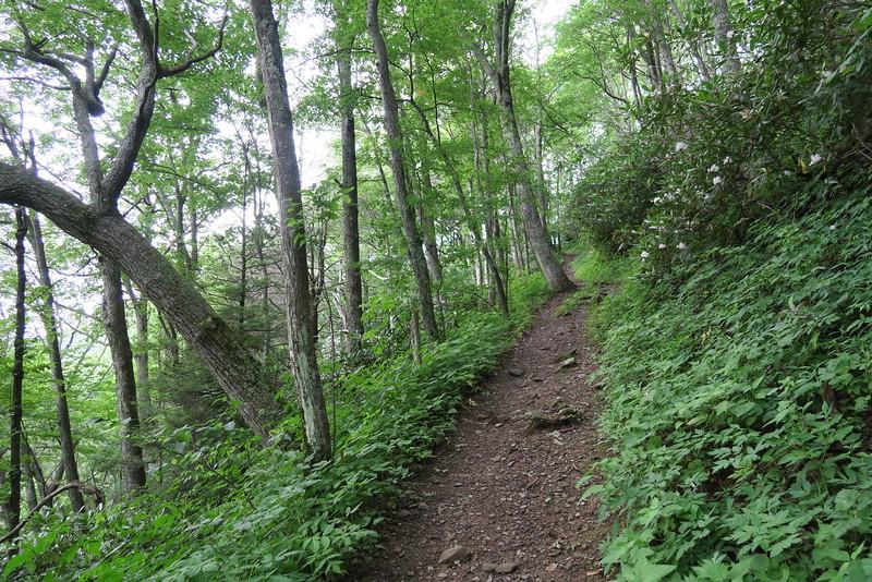 Appalachian Trail - 4,400'