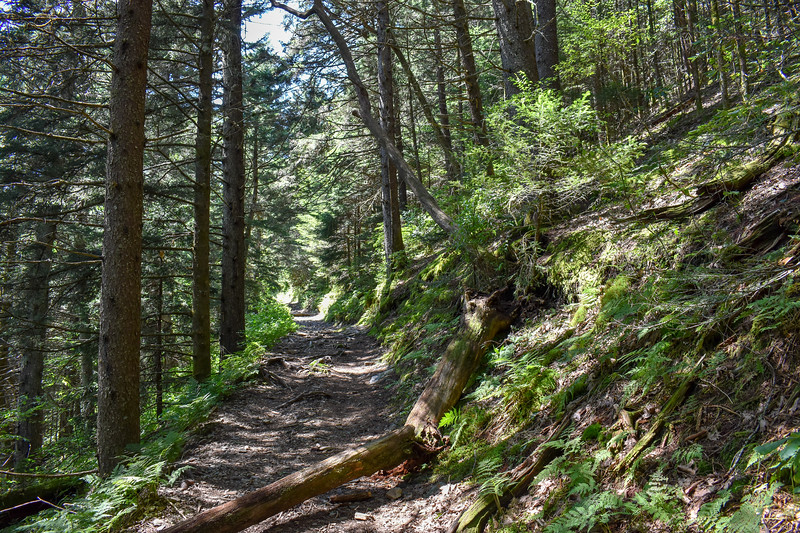 Mount Sterling Trail -- 5,550'