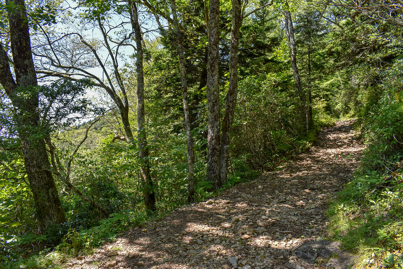 Mount Sterling Trail -- 5,350'