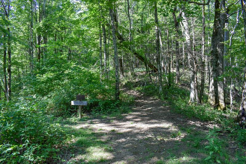 Mount Sterling/Long Bunk Trail Junction -- 4,180'