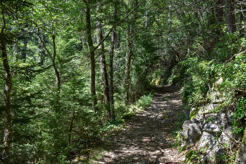 Mount Sterling Trail -- 5,130'