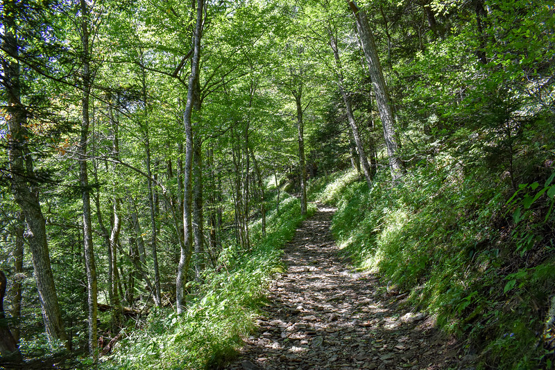 Mount Sterling Trail -- 5,450'