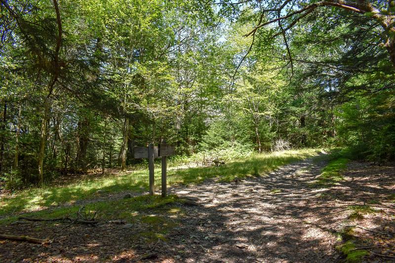 Mount Sterling/Mount Sterling Ridge Trail Junction -- 5,680'