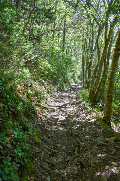 Mount Sterling Trail -- 5,020'