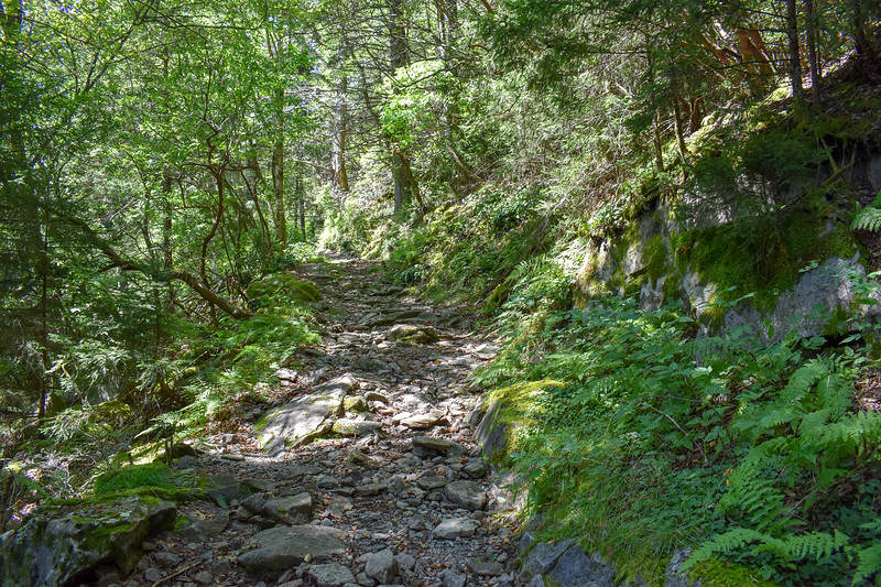 Mount Sterling Trail -- 5,050'