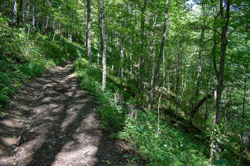 Mount Sterling Trail -- 4,650'