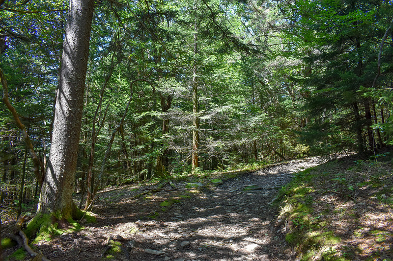 Mount Sterling Trail -- 5,660'