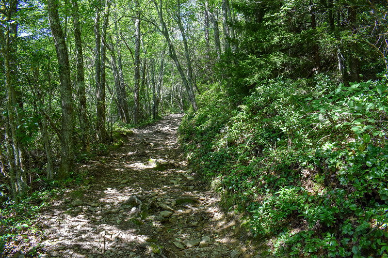 Mount Sterling Trail -- 4,980'