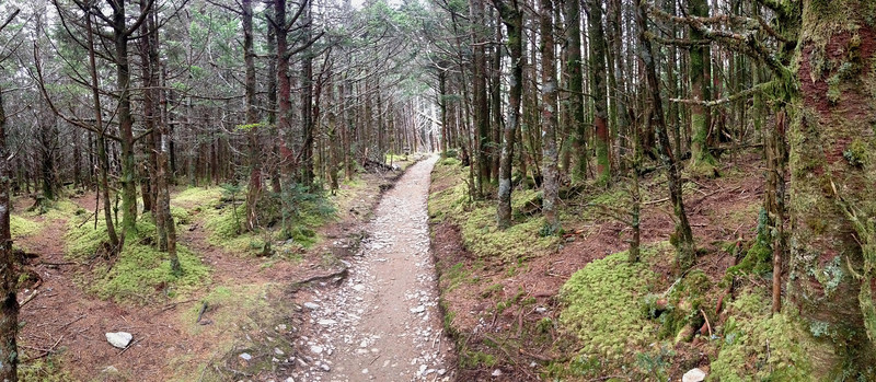 <b>6,400'</b> - With the distinct smell of a high elevation spruce-fir forest enveloping me, possibly one of my favorite scents, I continued on the last few steps to the LeConte Lodge...