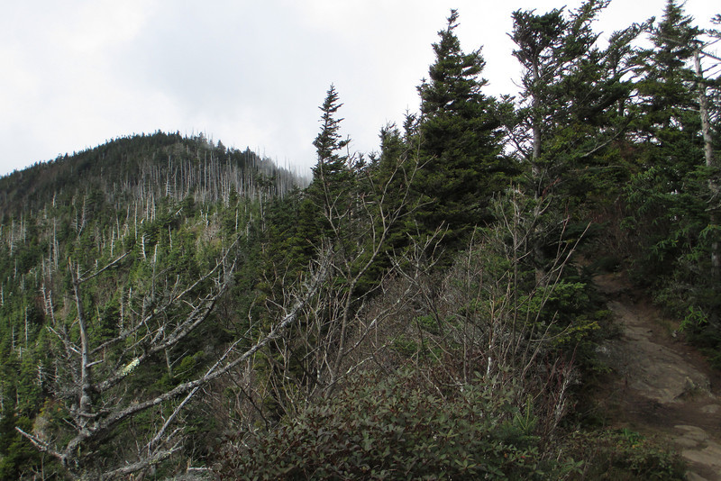 <b>6,420'</b> - Not wanting to waste this break in the clouds I decided to high tail it over to Cliff Top.  Here, LeConte's High Top summit (6,593') rises just ahead of me as I leave Myrtle Point...