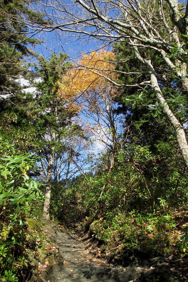 <b>4,650'</b> - Climbing through the mixed forest along Peregrine Peak...