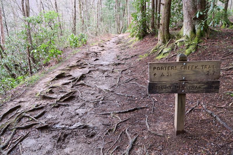 Porter's Creek-Brushy Mountain Trail Junction