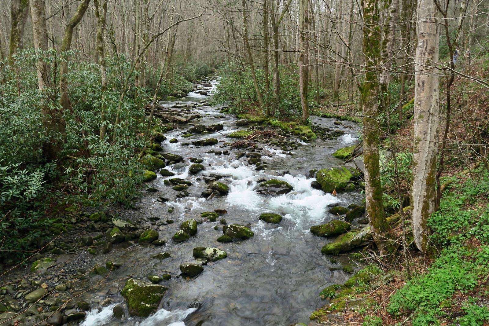 Porter's Creek