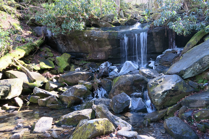 Tributary of LeConte Creek -- 4,100'