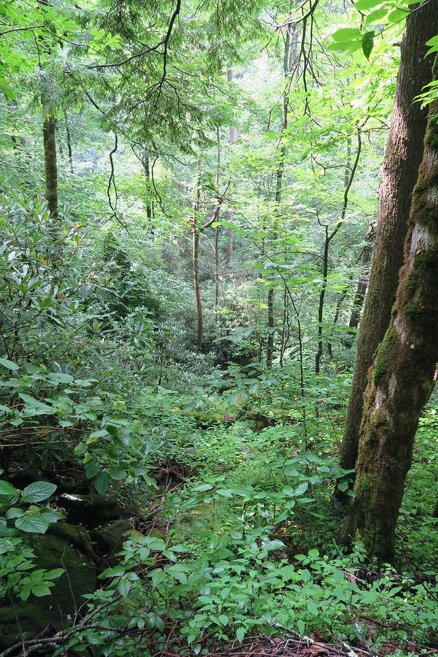 Ramsey Cascades Trail - 2,400'