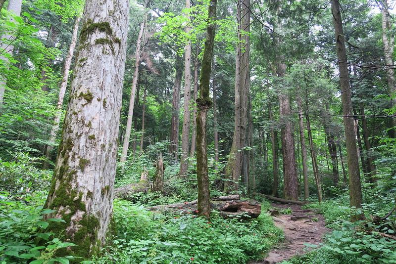 Ramsey Cascades Trail - 4,000'