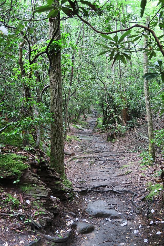 Ramsey Cascades Trail - 2,700'